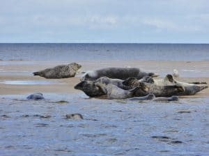 Super Seals and Speyside