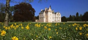 Daffodils at Brodie Castle if visiting Scotland in April 2021