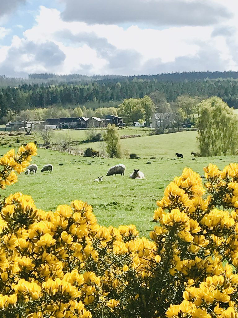 Spring View - May in Scotland